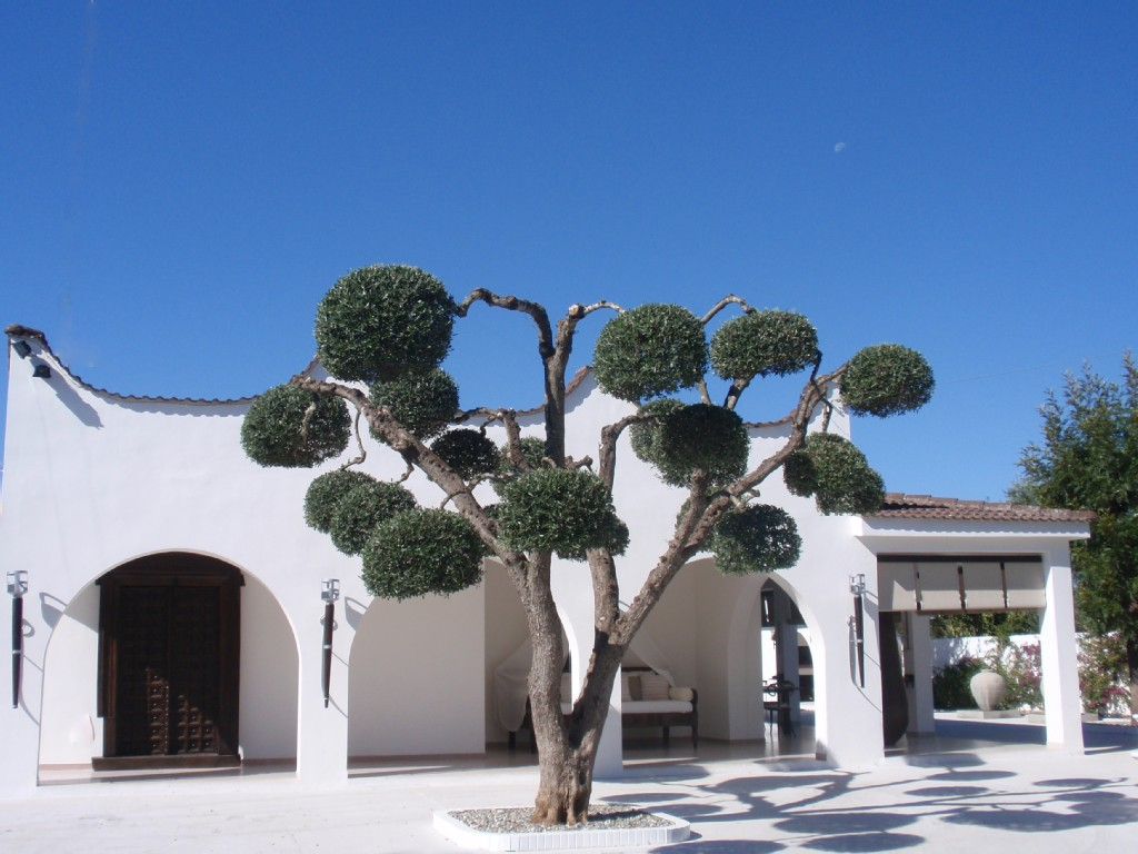 Luxury villa with swimming pool for sale Puglia Italy, beautiful garden