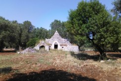 trullo for sale in puglia with olive grove