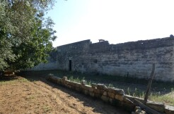 Traditional building for sale in Puglia, Italy, with olive grove