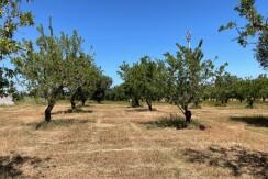 Land for sale with sea view, Carovigno Serranova