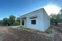 Country house for sale Francavilla Fontana, olive grove